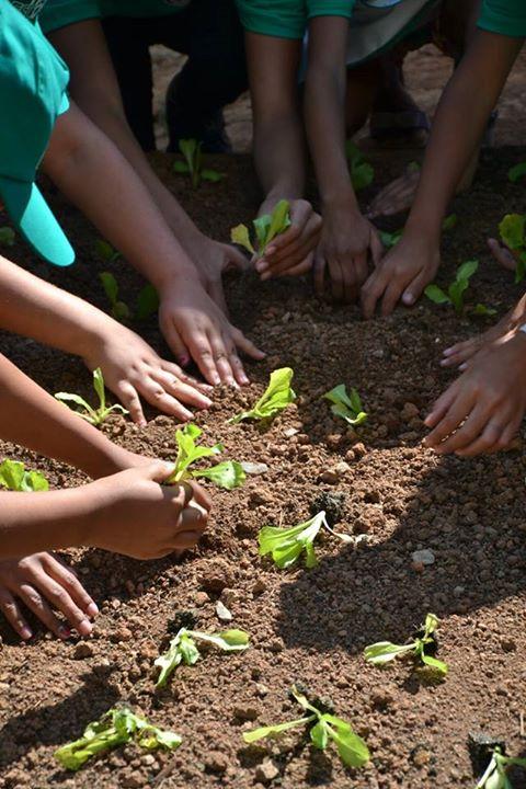 Projeto em SP estimula alimentação saudável entre crianças de escolas da rede pública 2