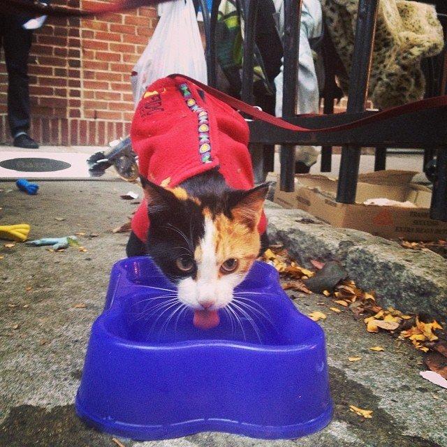 Abrigo em Nova York oferece almoço para moradores de ruas e seus animais 2
