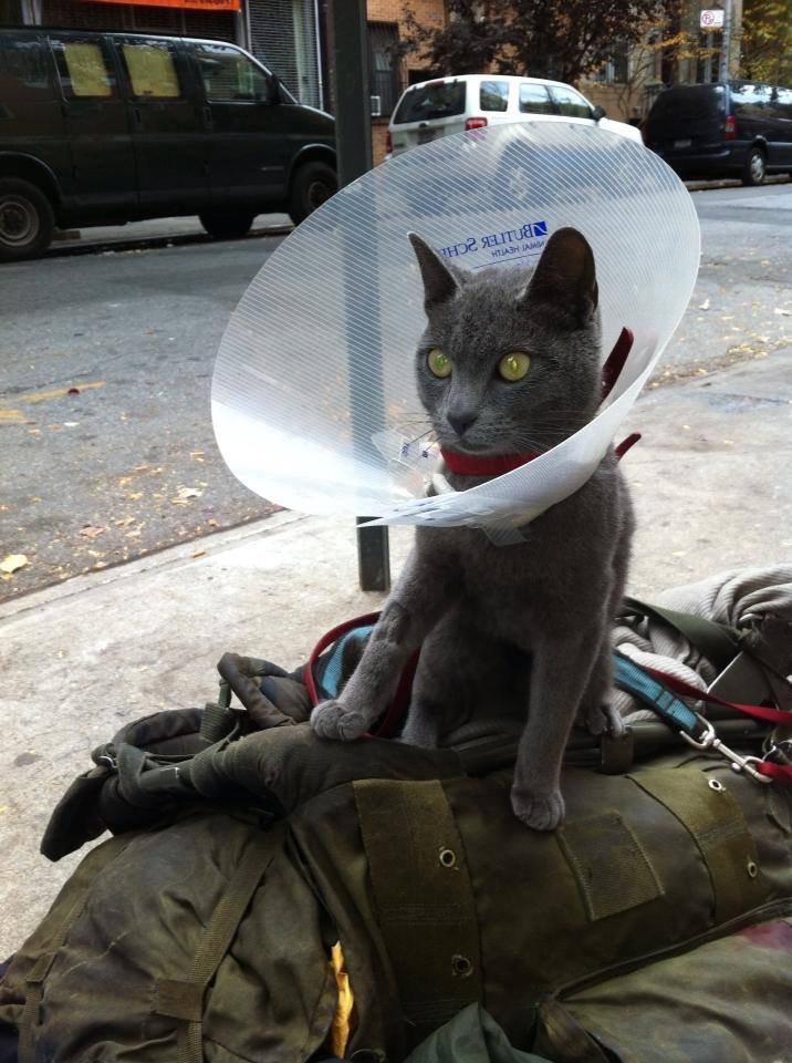 Abrigo em Nova York oferece almoço para moradores de ruas e seus animais 3