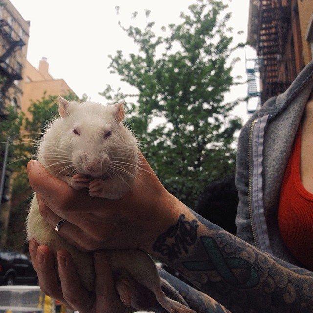 Abrigo em Nova York oferece almoço para moradores de ruas e seus animais 4