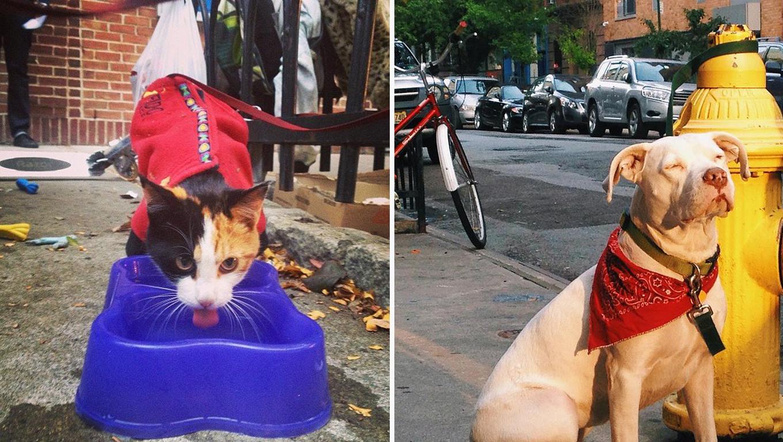 Abrigo em Nova York oferece almoço para moradores de ruas e seus animais 1