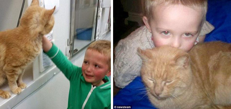 Garotinho foi adotar um novo gato e reencontra seu bichano perdido há mais de um ano 1
