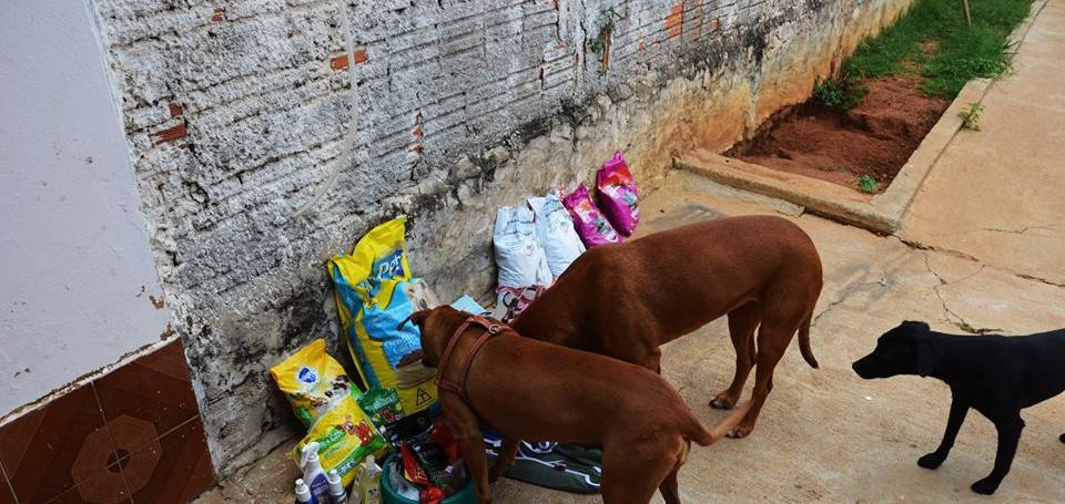 Projeto arrecada doações para abrigos de animais abandonados 1