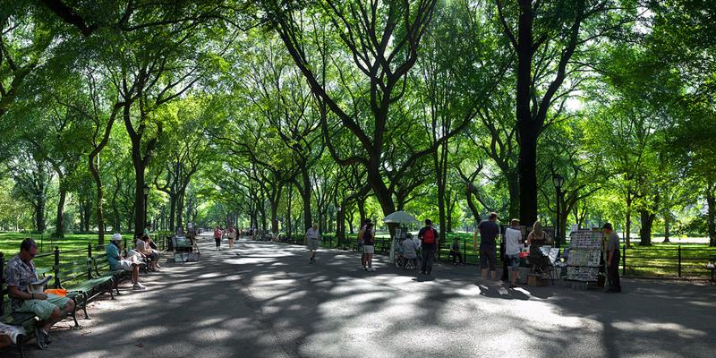 Nova York planta um milhão de árvores dois anos antes do tempo previsto 3