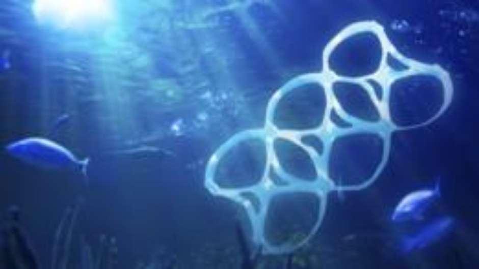 Cientistas americanos descobrem larva que pode reciclar o lixo 1