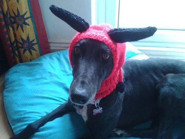 Mulher faz casacos e cachecóis para cães abandonados 5