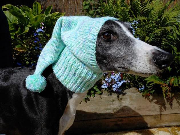 Mulher faz casacos e cachecóis para cães abandonados 7