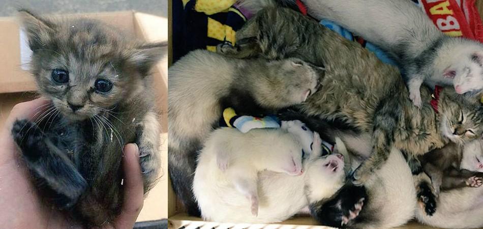 Gatinha adotada por 5 furões agora pensa que é um deles 2