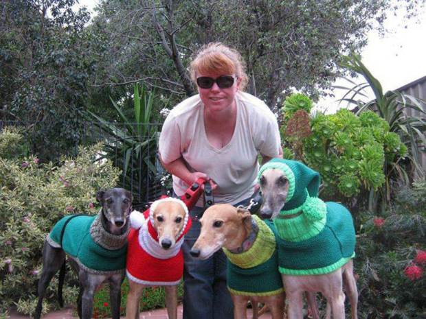 Mulher faz casacos e cachecóis para cães abandonados