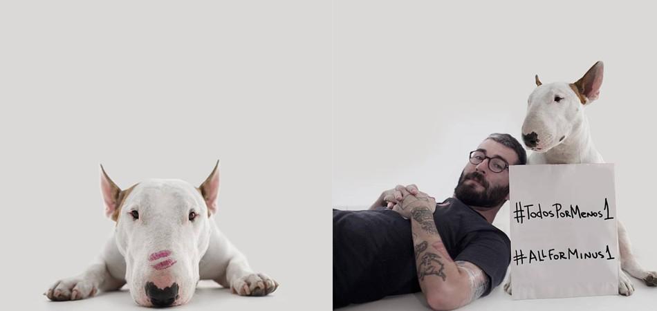 Cão brasileiro mais famoso do Instagram faz apelo a marcas de ração em prol de cães de abrigos 3