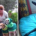Mulher faz casacos e cachecóis para cães abandonados não passarem frio