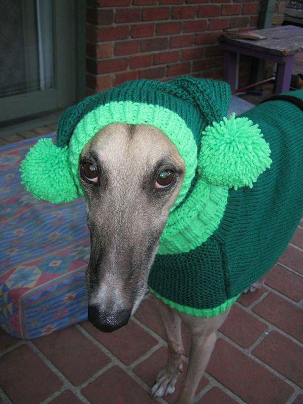 Mulher faz casacos e cachecóis para cães abandonados 3
