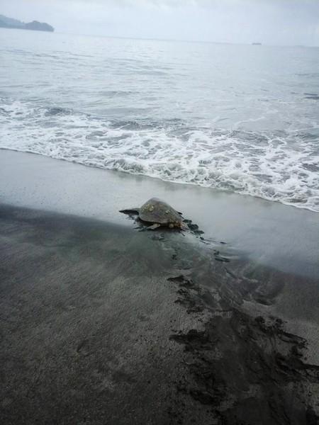 homem-compra-tartaruga-03-450x600