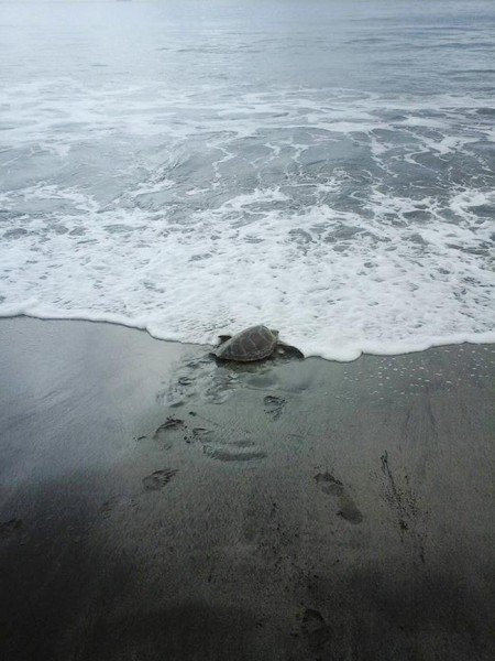 homem-compra-tartaruga-04-450x600