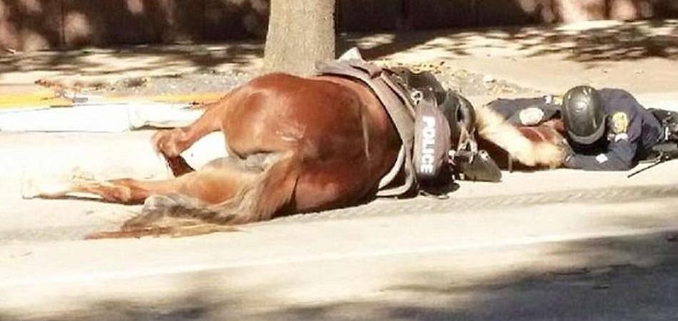 Foto de policial confortando cavalo atropelado emociona a web 1