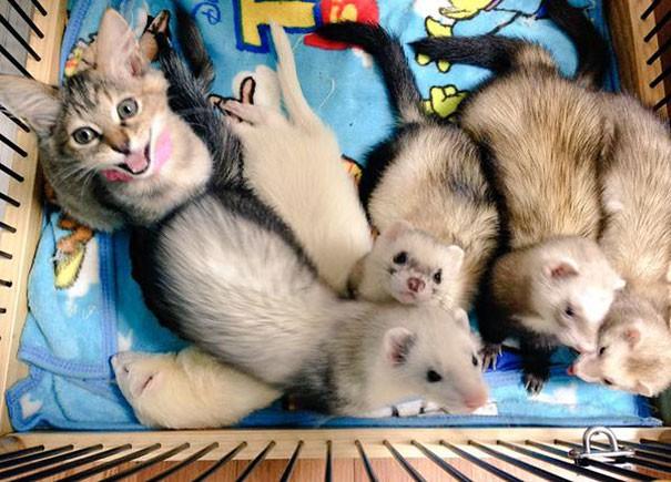 rescue-kitten-komari-ferret-brothers-55