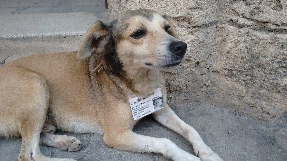Cachorros_Havana_-_Francis_Paula