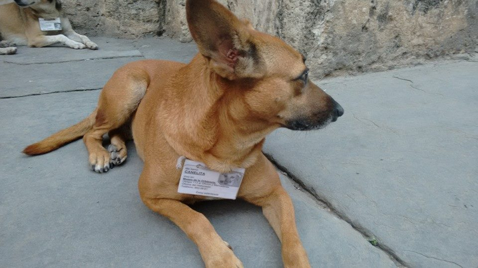 Cachorros_Havana_-_Francis_Paula__2