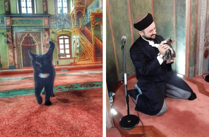 CatMosque4
