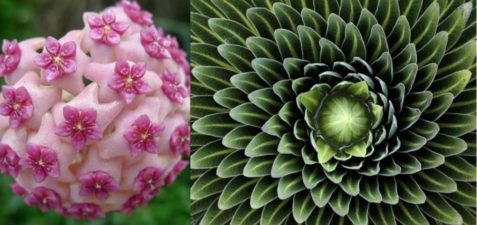 23 plantas que provam que a natureza entende muito de geometria 4
