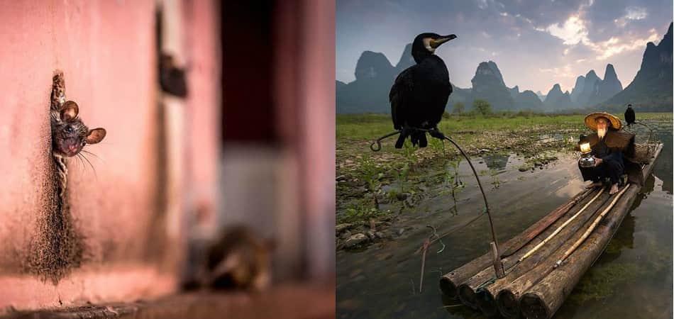 Maravilhe-se com as 20 melhores fotografias da National Geographic de 2015 1