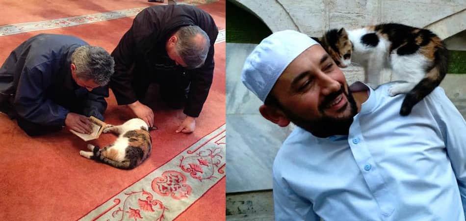Mesquita abre suas portas para abrigar gatos de rua do frio 1