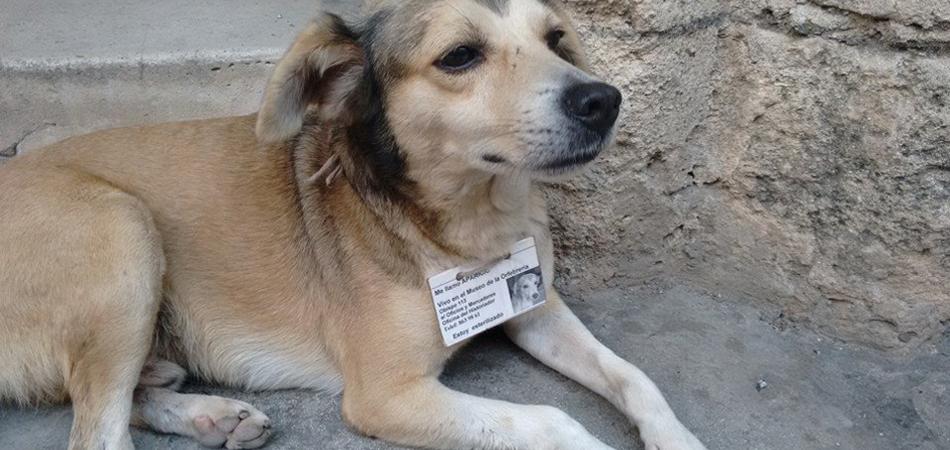 Animais abandonados são castrados, identificados e alimentados em Havana (Cuba) 1