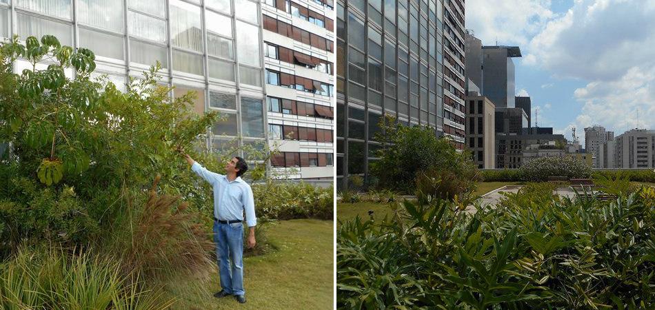 SP ganha primeiro telhado verde com floresta de Mata Atlântica 2