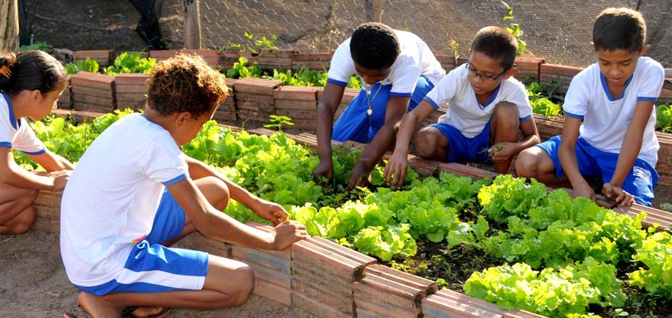 Alunos de Palmas (TO) aprendem a plantar alimentos orgânicos 2