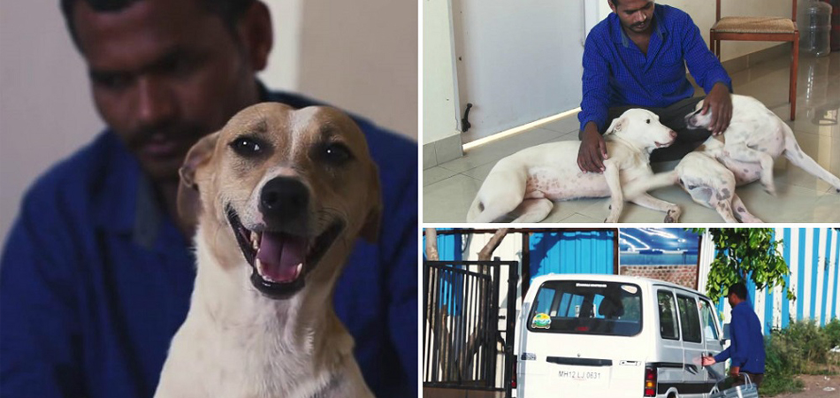 Indiano junta dinheiro por 10 anos e compra van que funciona como ambulância para cães abandonados 1