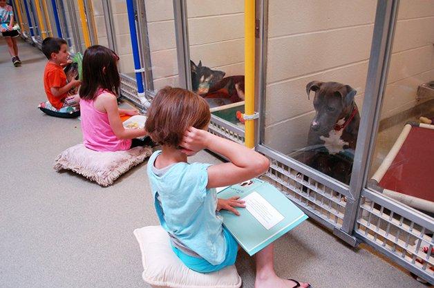 Crianças leem para cães que sofreram maus tratos e os ajudam a interagir com humanos 2
