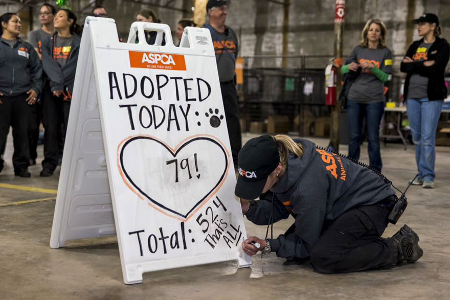 524-perros-gatos-adoptados-evento-aspca-4