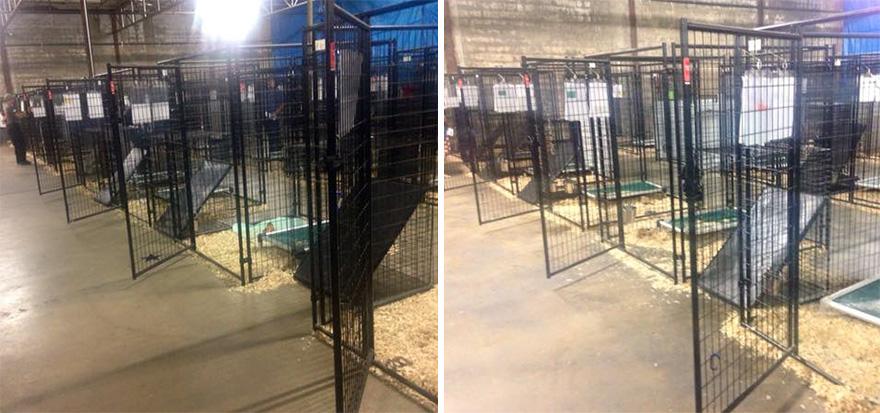 524-perros-gatos-adoptados-evento-aspca-6
