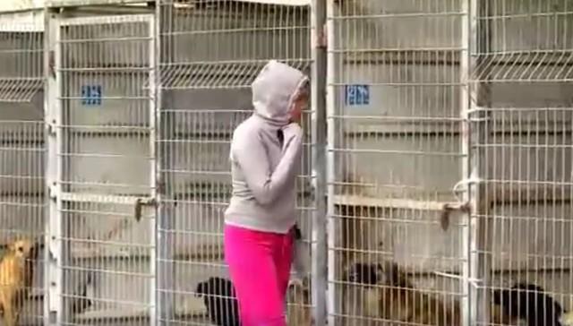 Mulher compra abrigo de cães, porque não sabia qual cão salvar 2