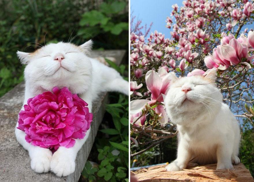 gato cheirando flores
