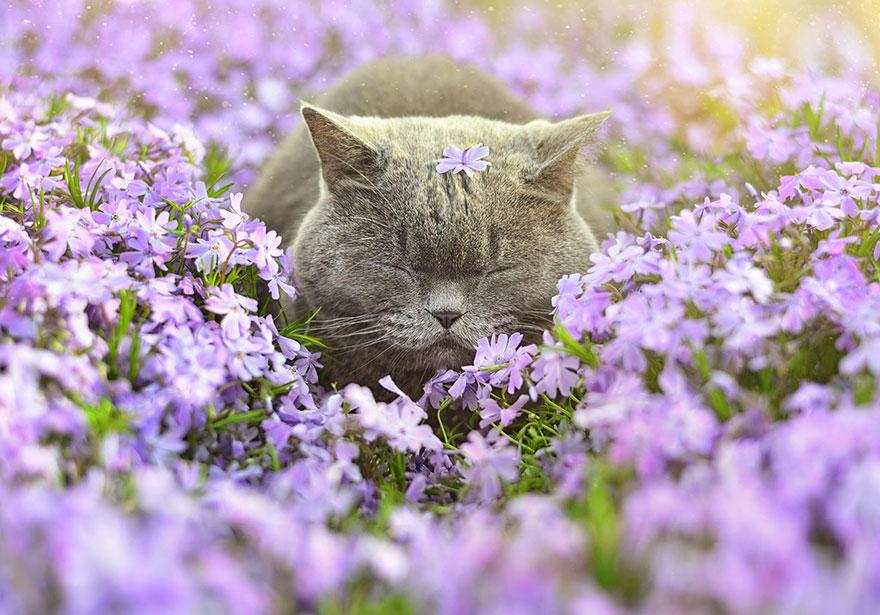 animais cheirando flores