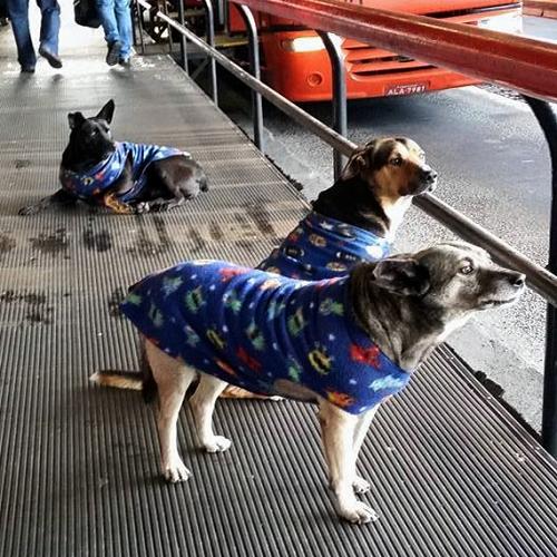 Cachorros-Curitiba