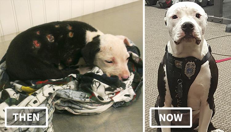 Cãozinho abandonado depois de incêndio vira bombeiro na corporação que o salvou 1