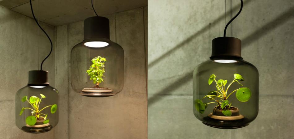 Estas lâmpadas inteligentes permitem que você cultive plantas sem luz solar 4