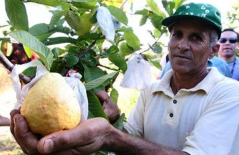 O agricultor que montou sozinho uma agroindústria para produção de sucos de fruta orgânicos 1