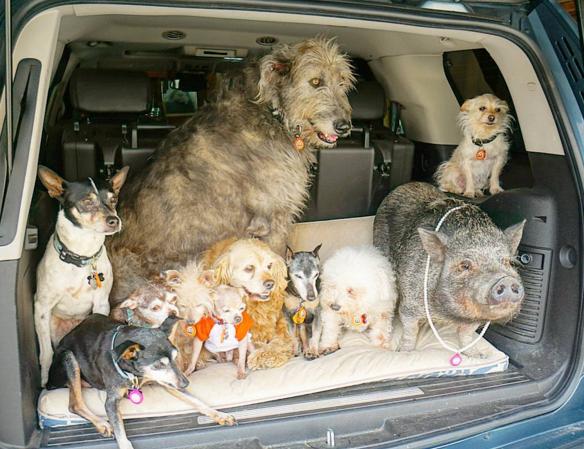 animais-adotados-capa