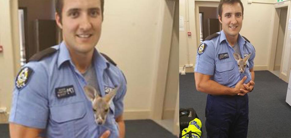 Bebê canguru de 4 meses 'adota' policial após perder a mãe em acidente 2