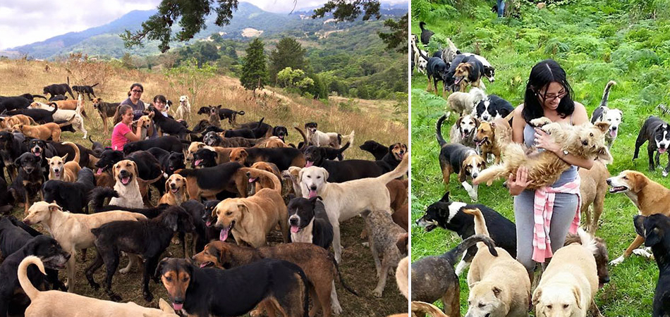 Conheça o Territorio de Zaguates: o paraíso para os cães de rua que fica na Costa Rica 2