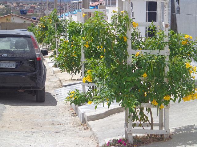 Campina Grande, na Paraíba, trabalha para ter duas árvores por habitante 2