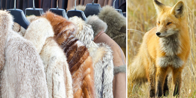 Lei proíbe comércio de peles de animais em São Paulo 1