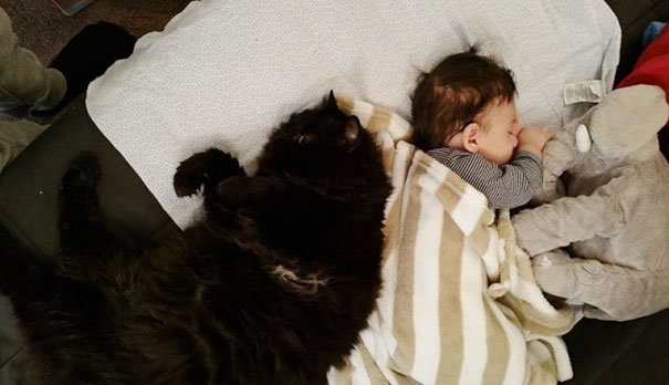 cat-guards-baby-pregnant-liel-ainmar-assayag-panda-6