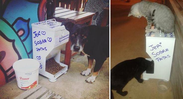Associação de moradores distribui comedouros comunitários para animais em Jericoacoara (CE) 1