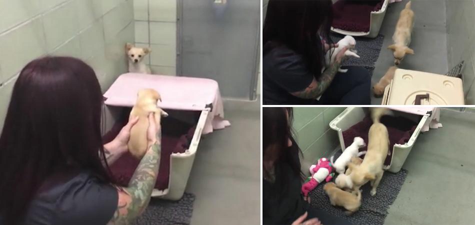 O reencontro comovente entre a cadela que foi separada dos seus filhotes 1