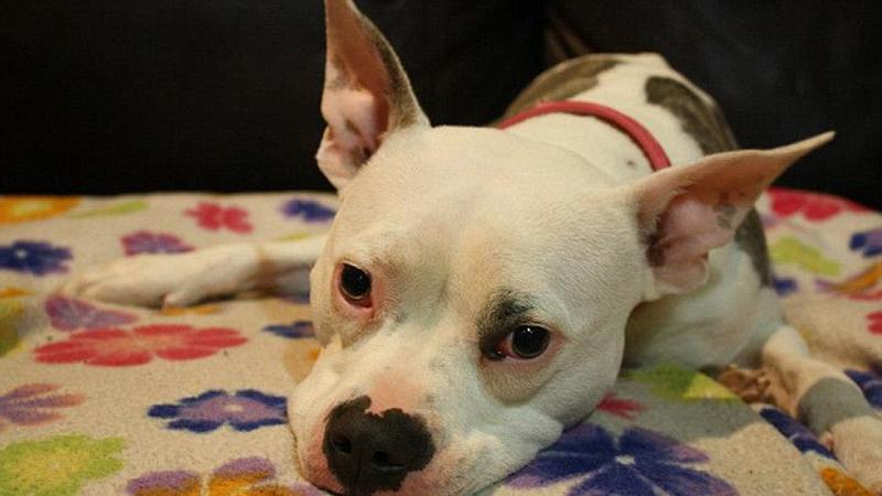Cachorra paralítica se arrasta para receber o tutor após 6 meses separados 1