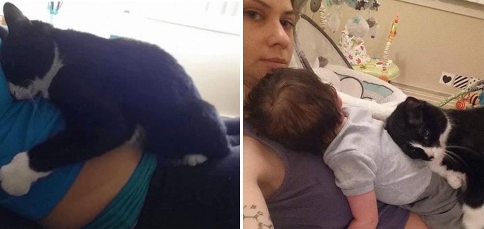 Conheça a gata que é guardiã de um bebê antes mesmo dele nascer 2